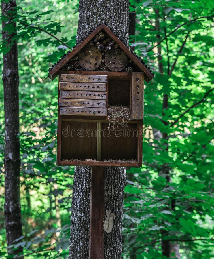 Una casa di legno per gli scoiattoli sotto forma di aviario su un albero la foresta fotografie stock libere da diritti