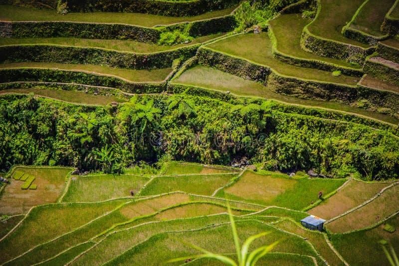 Una casa isolata dell'azienda agricola sui terrazzi del riso di Batad fotografia stock