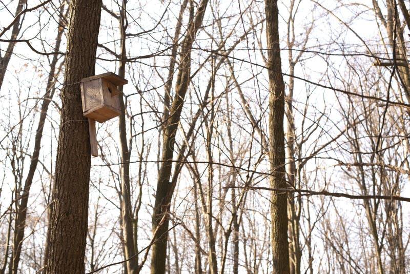 Una casa per gli uccelli su un albero fotografia stock