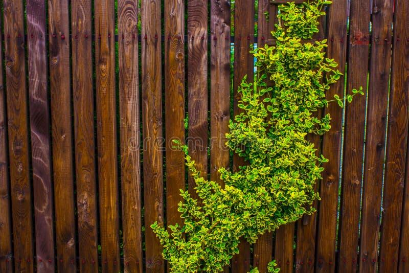 Una cerca de madera tejida con los azotes Fondo Naturaleza foto de archivo