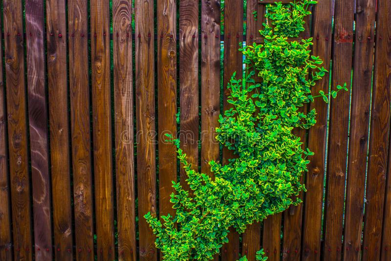 Una cerca de madera tejida con los azotes Fondo Naturaleza imagen de archivo