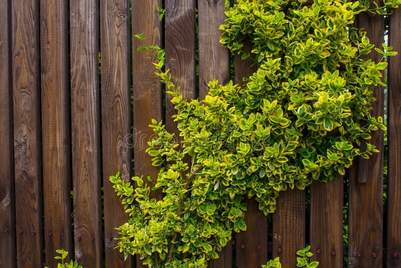 Una cerca de madera tejida con los azotes Fondo Naturaleza imagenes de archivo