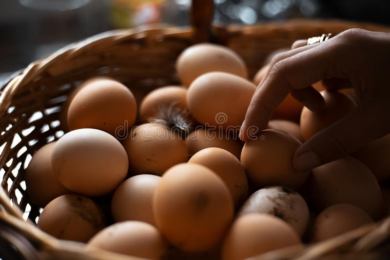 Una cesta por completo de huevos del pollo fotografía de archivo