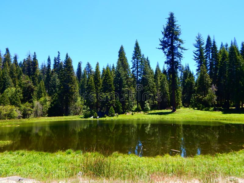 Una charca en el parque nacional de Yosemite fotos de archivo libres de regalías