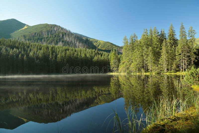Una charca rodeada por los árboles en las montañas de Tatra foto de archivo libre de regalías