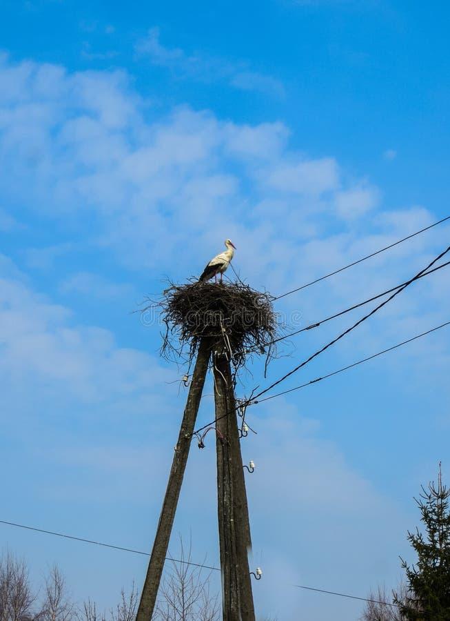 Una cigüeña blanca se coloca en una jerarquía que se doble en un polo para los alambres fotos de archivo