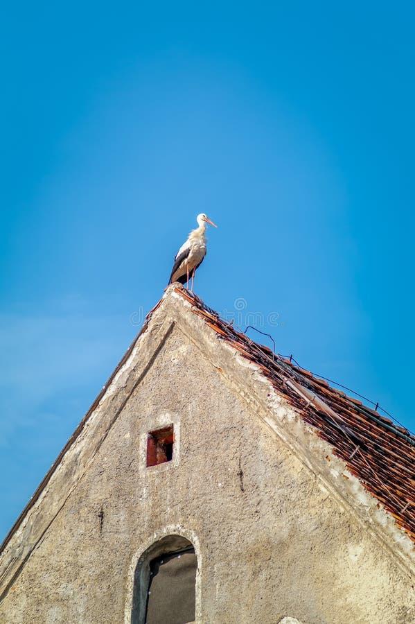 Una cigüeña encaramada al borde del tejado imagen de archivo libre de regalías