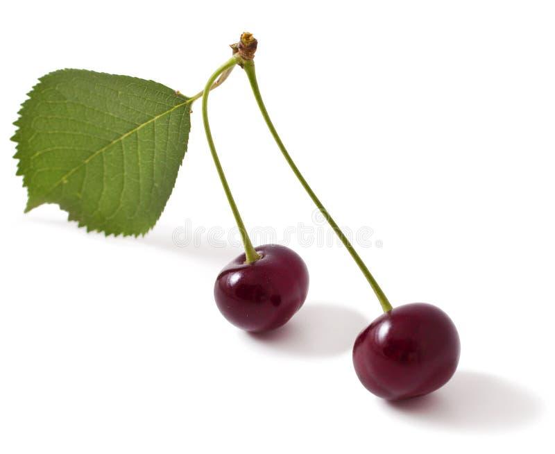 Una ciliegia di due colori rossi fotografie stock libere da diritti