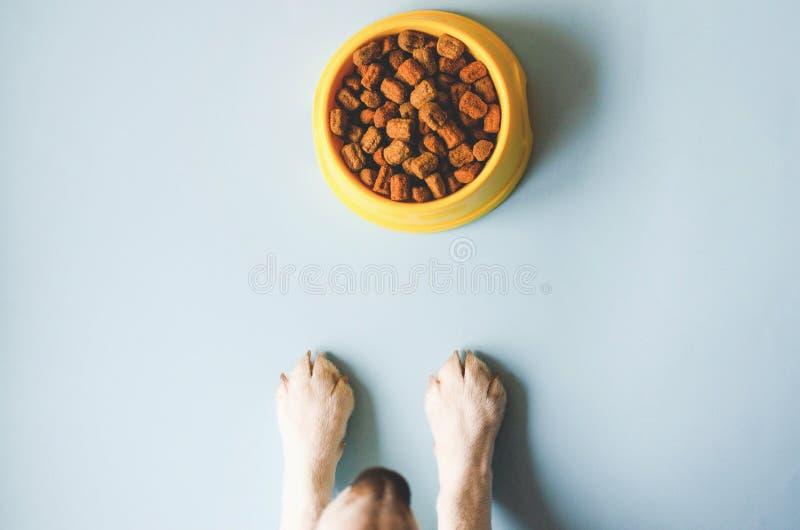 Una ciotola di colore giallo con alimento e le zampe con un fronte del cane fotografia stock