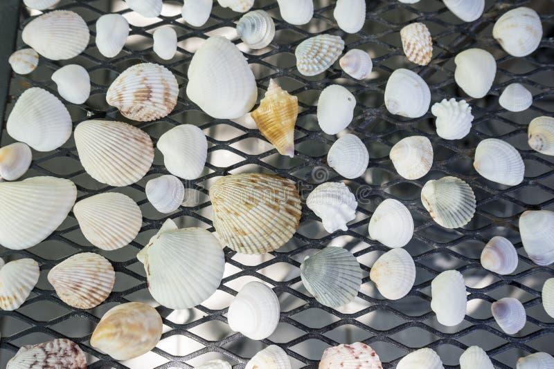 Una colección de conchas marinas clasificadas imagen de archivo libre de regalías