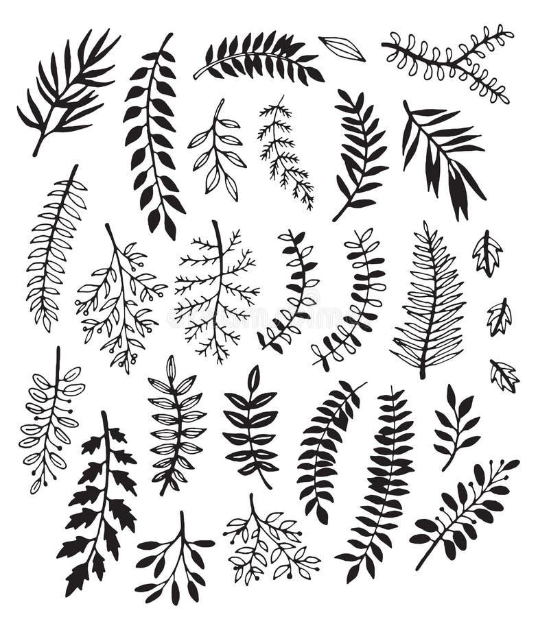 Una colección de hojas exhaustas de la mano en blanco y negro libre illustration