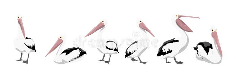 Una colección de pelícanos en diversas actitudes stock de ilustración