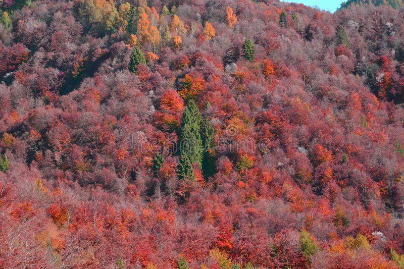 una colina de los colores del otoño imagenes de archivo