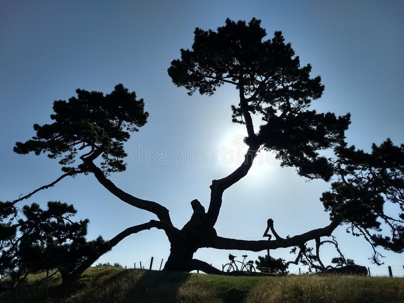 Una colina del árbol imagen de archivo libre de regalías