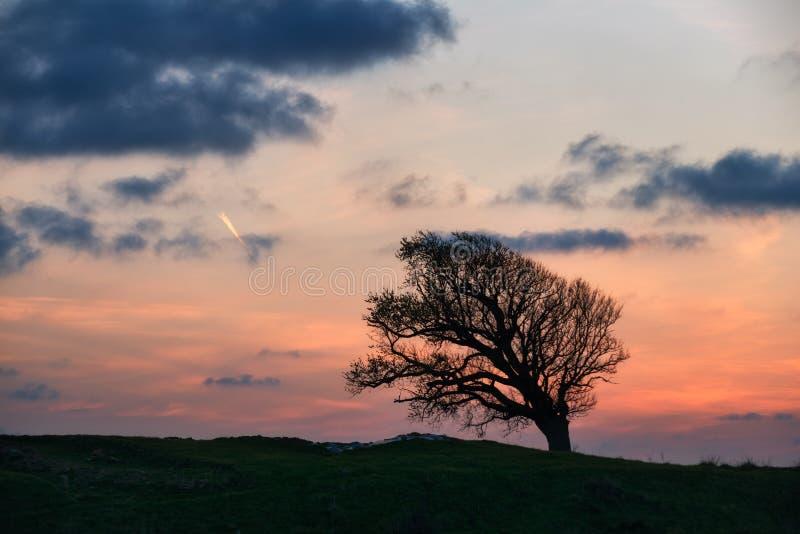Una colina del árbol en la puesta del sol imagen de archivo