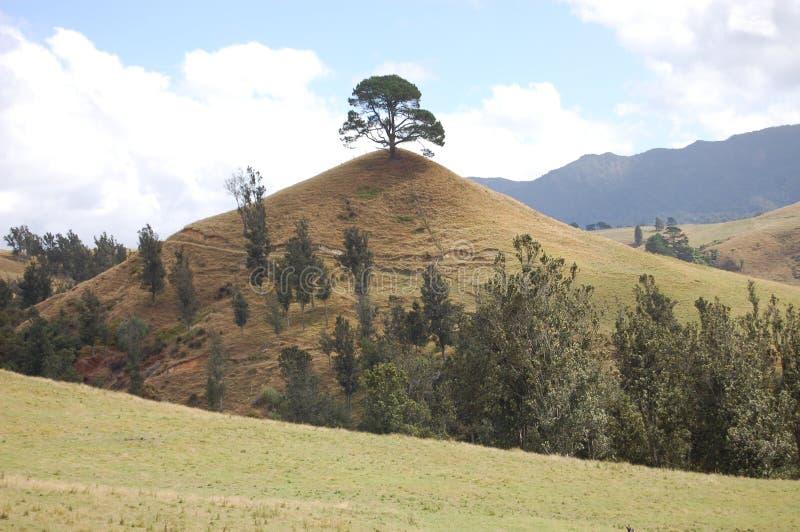 Una collina dell'albero fotografie stock