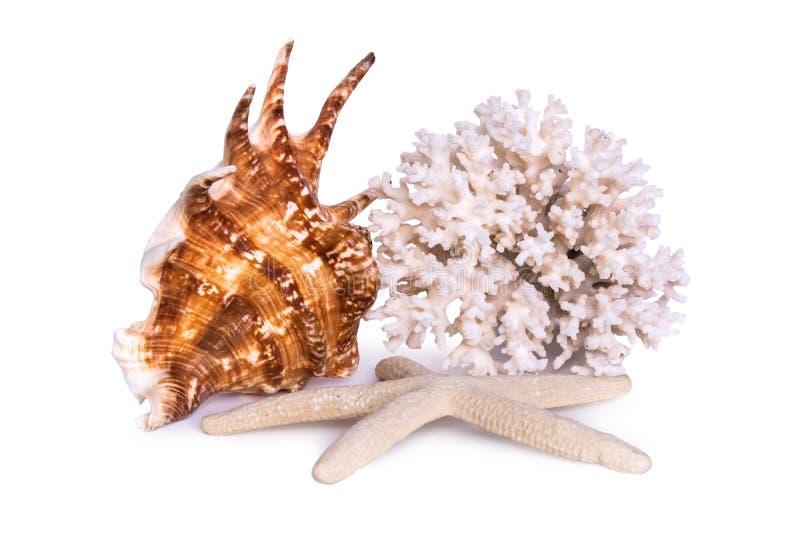 Una composición de la cáscara del mar, de estrellas de mar y del coral grandes se aísla en un fondo blanco imagen de archivo