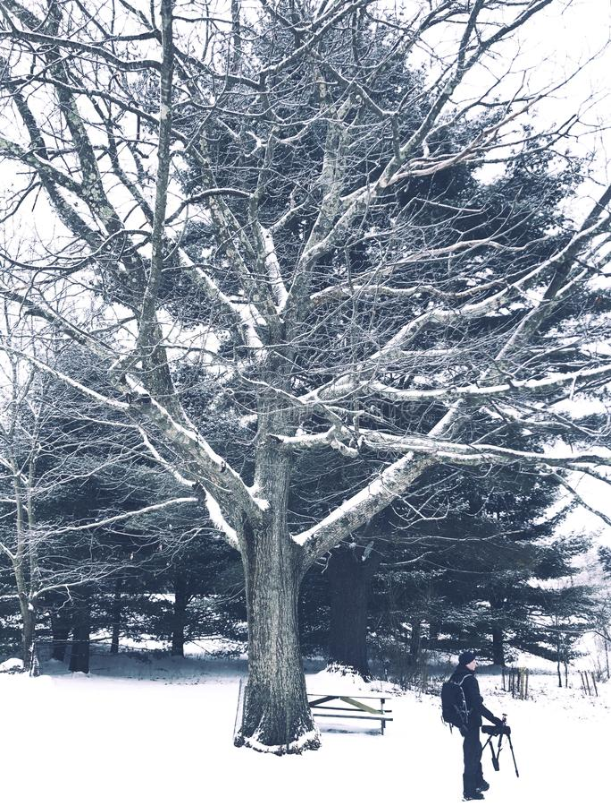 Una condizione dell'uomo sotto un grande albero fotografie stock libere da diritti