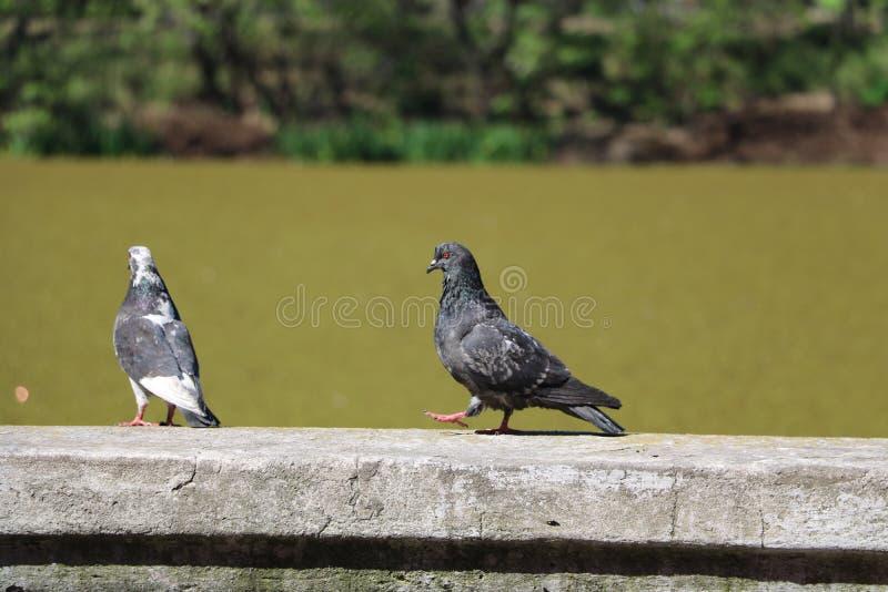 Una conversazione dei due uccelli immagine stock libera da diritti