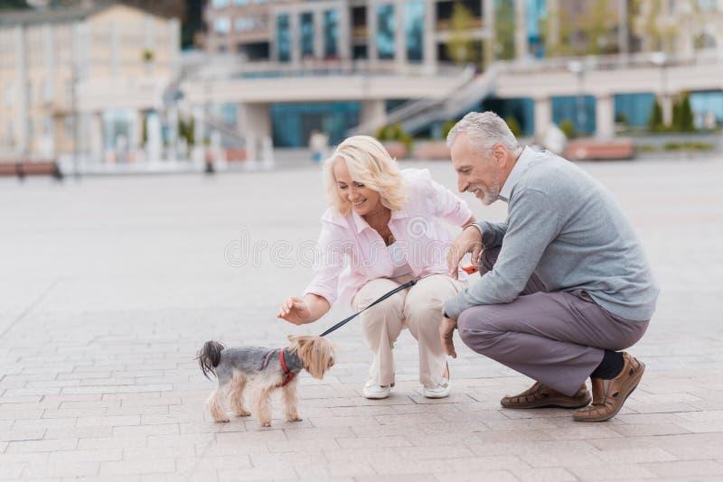 Una coppia anziana sta camminando nel quadrato con il suo piccolo cane Camminano ed il cane cammina accanto loro su un guinzaglio fotografia stock