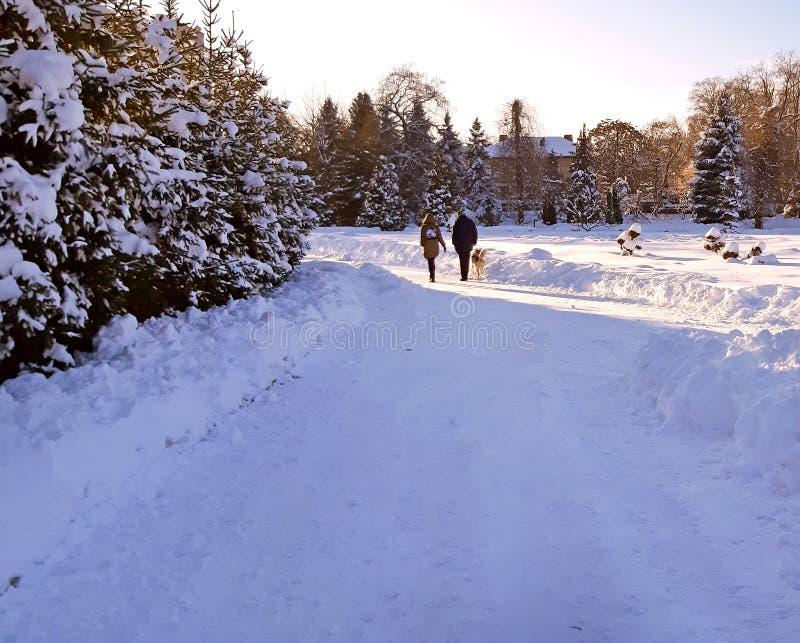 Una coppia che cammina con il suo cane nel parco nell'inverno fotografia stock libera da diritti