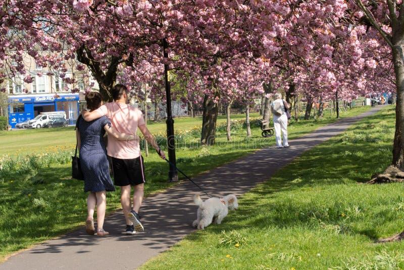 Una coppia che cammina il loro cane un giorno di molla soleggiato fotografie stock libere da diritti