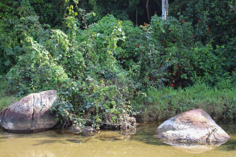 Una corrente fra la vegetazione immagini stock libere da diritti
