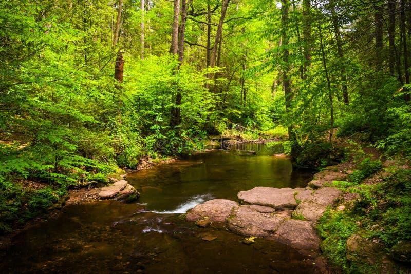Una corriente en un bosque enorme en Ricketts Glen State Park, Pennsylva fotos de archivo