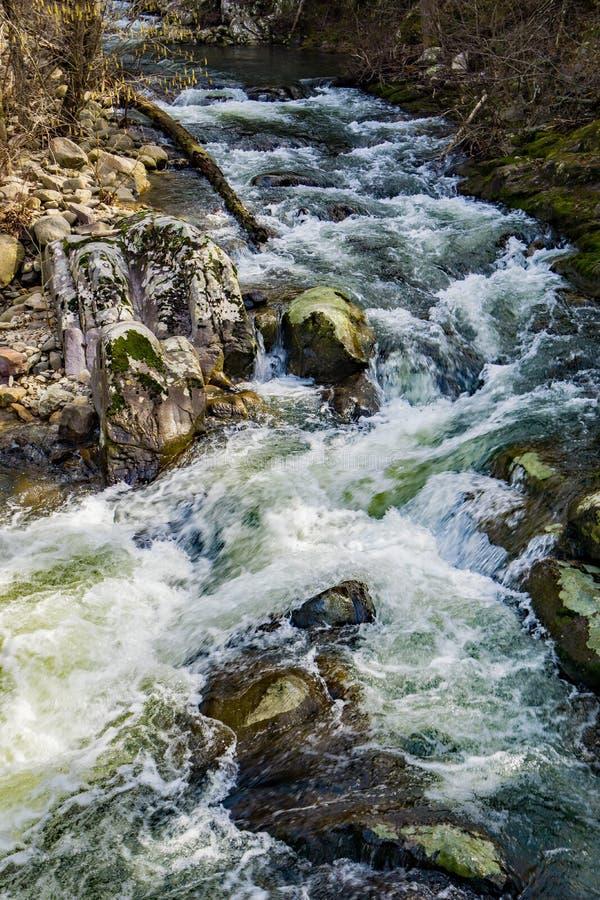 Una corriente salvaje de la trucha de la montaña en Ridge Mountains azul imagen de archivo libre de regalías