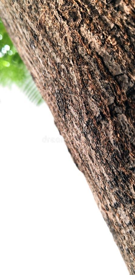Una corteza de árbol sola en el jardín fotografía de archivo
