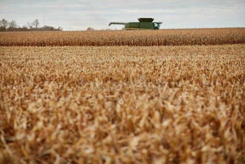 Una cosecha del cereal seco, un rastrojo y una máquina segadora fotografía de archivo libre de regalías