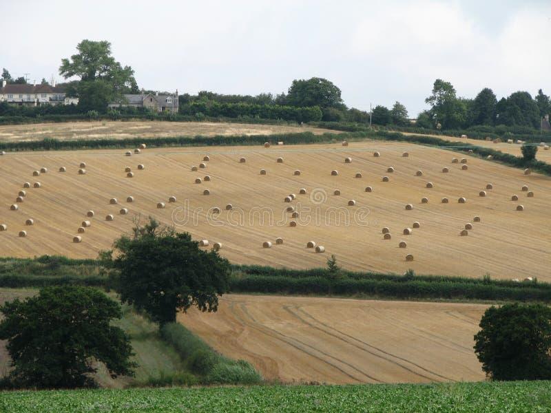 Una cosecha inglesa foto de archivo