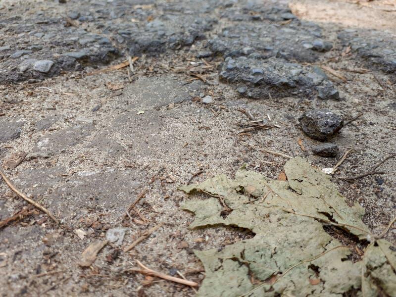 Una crepa nella pavimentazione fotografia stock