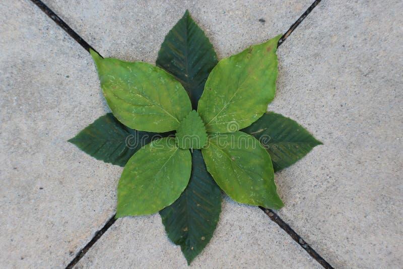 Una cultura de hojas foto de archivo