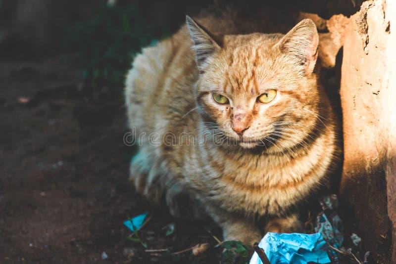 Una de las cosas más hermosas de la mirada del ` s del gato del mundo imagen de archivo libre de regalías
