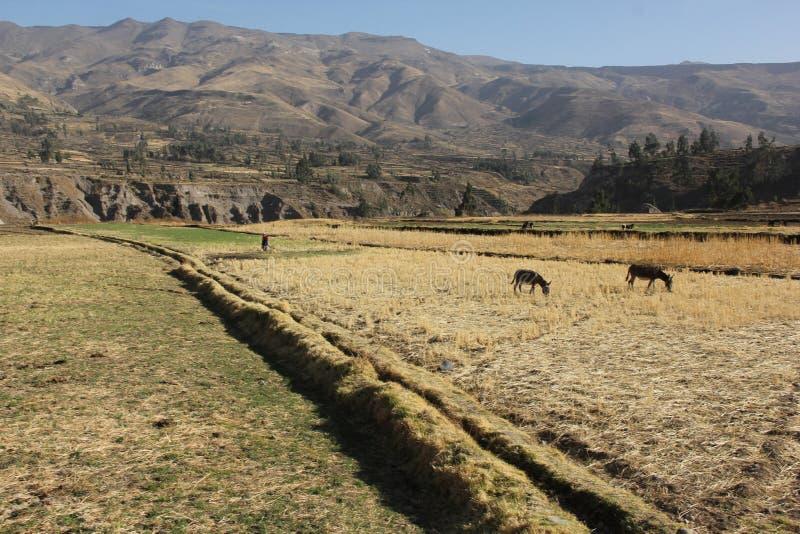 Una delle valli del canyon di Colca immagine stock libera da diritti