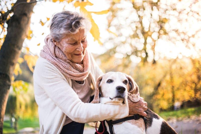 Una donna anziana con il cane su una passeggiata in natura di autunno immagini stock libere da diritti
