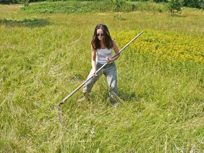 Una donna che falcia e che falcia erba sul campo morte fotografia stock libera da diritti