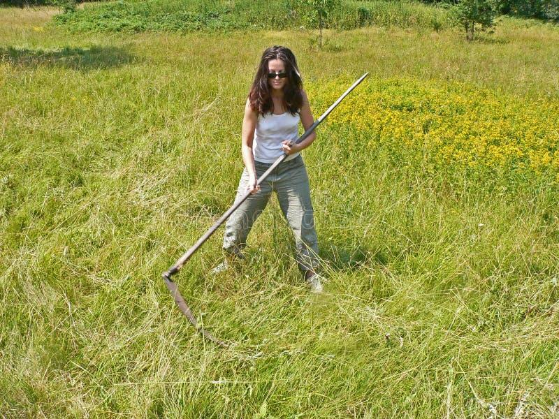 Una donna che falcia e che falcia erba sul campo morte fotografie stock libere da diritti