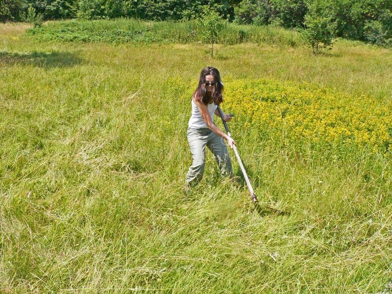 Una donna che falcia e che falcia erba sul campo morte fotografia stock