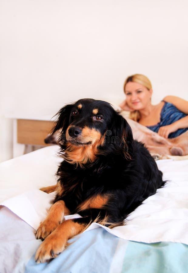 Una donna con i suoi cani a casa, rilassandosi nella camera da letto fotografie stock libere da diritti