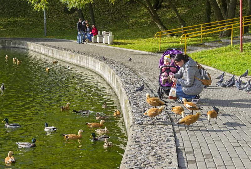 Una donna con un bambino alimenta le anatre sullo stagno della banchina fotografia stock