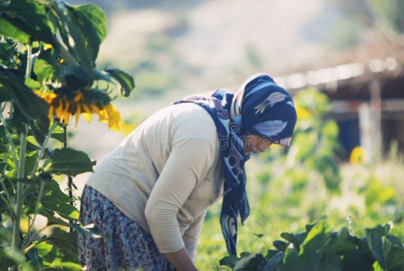 Una donna lavora nei campi di un'azienda agricola in cappadocia il 10 luglio 2019 fotografie stock libere da diritti