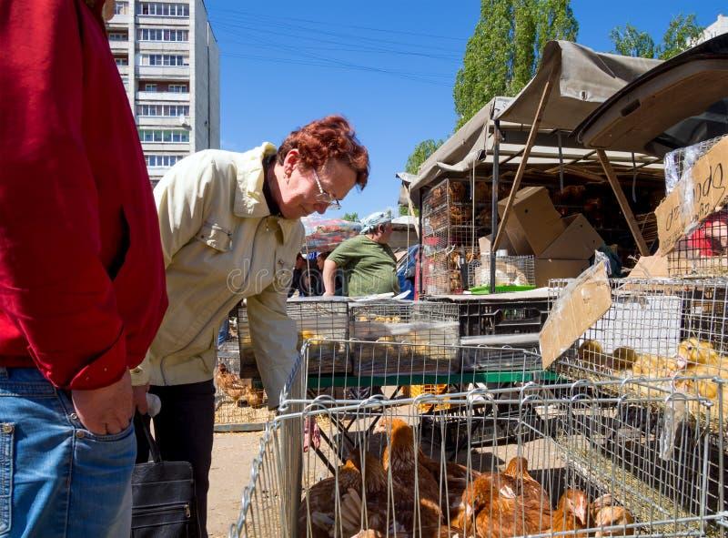 Una donna sceglie il pollame sul mercato fotografia stock