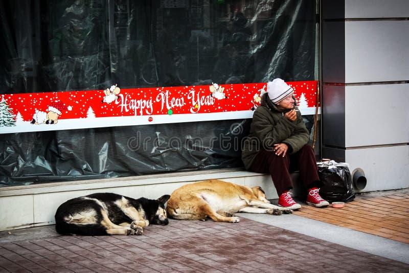 Una donna sola, senza tetto, alcoldipendente che si siede davanti alle vetrine con la decorazione del nuovo anno con due cani del fotografia stock libera da diritti