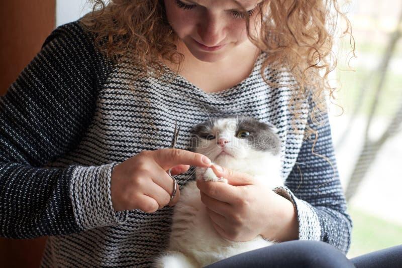 Una donna taglia gli artigli di un gatto con le forbici dell'unghia, cura di animale domestico immagini stock
