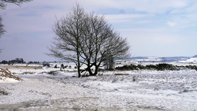 Una escena de la nieve del campo en Devon South West England imagen de archivo