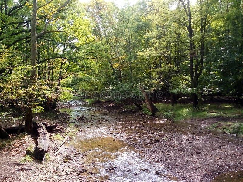 Una escena de un bosque en Ohio imagen de archivo libre de regalías