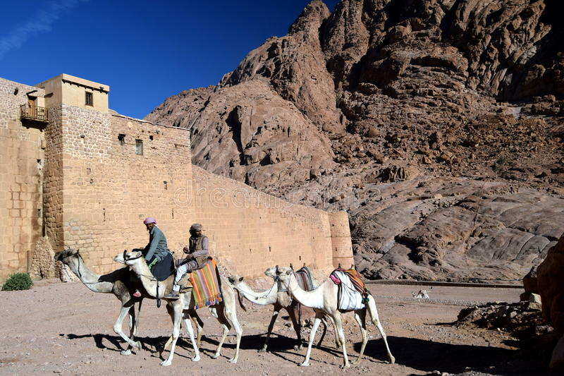 Una escena del desierto de los hombres que llevan camellos acerca al monasterio del siglo IV del ` s del St Catherine, base del M imagen de archivo