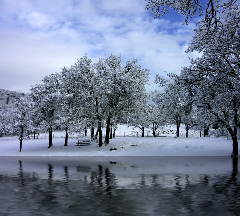 Una escena del parque del invierno fotos de archivo libres de regalías